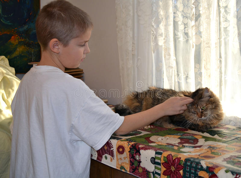 Boy Petting a Longhaired Cat royalty free stock photo
