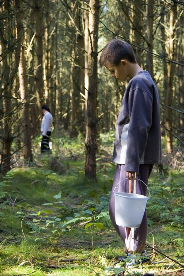 Download Boy picking wild mushrooms stock image. Image of ingredients - 3225913