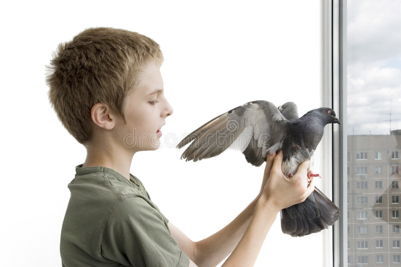 Boy with the pigeon. At the balcony stock photos