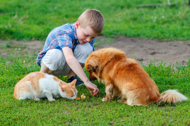 Boy in a plaid shirt feeding the cat and dog in the yard royalty free stock photo