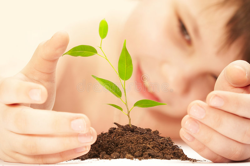 The boy and plant. The boy observes cultivation of a young plant stock image