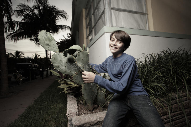 Boy playing with a cactus plant stock photos