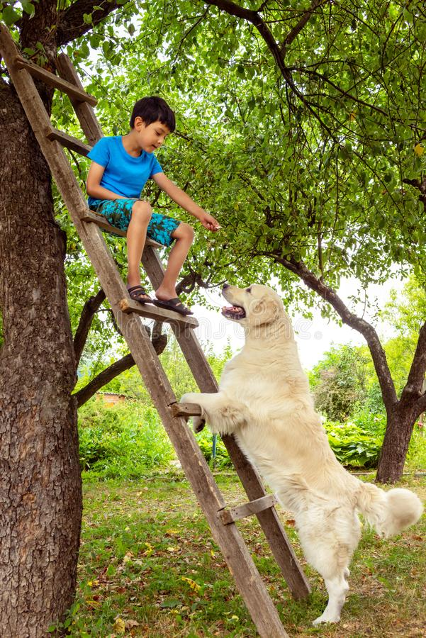 A boy playing with a dog in the garden.  He sits on a wooden stepladder and feeds the dog. A boy playing with a dog in the garden.  He sits on a wooden stock image
