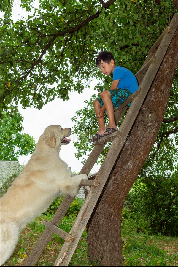 A boy playing with a dog in the garden.  He sits on a wooden stepladder and feeds the dog. A young boy playing with a dog in the garden. He sits on a wooden royalty free stock image