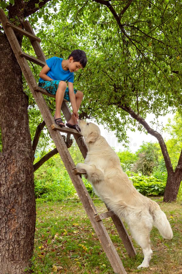 A boy playing with a dog in the garden.  He sits on a wooden stepladder and feeds the dog. A boy playing with a dog in the garden.  He sits on a wooden stock photos