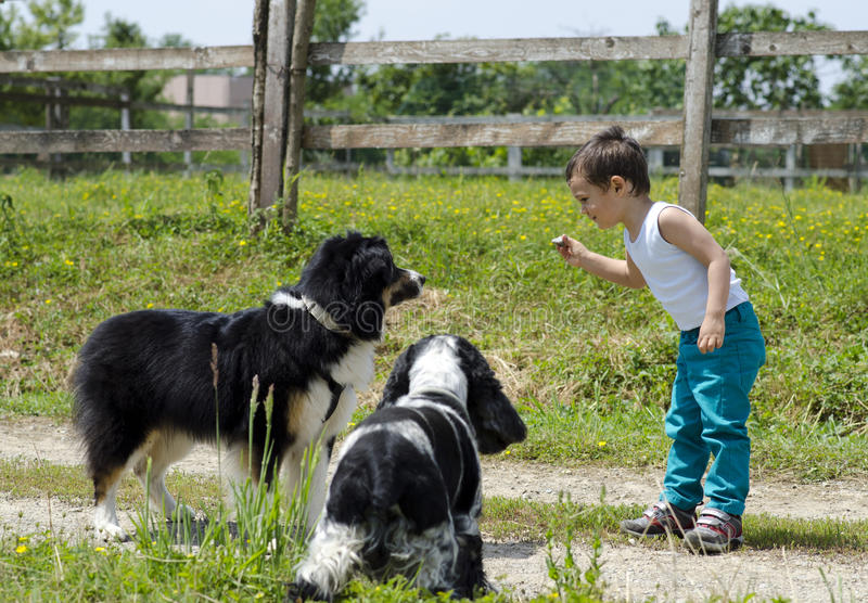 Boy playing with dogs stock photography