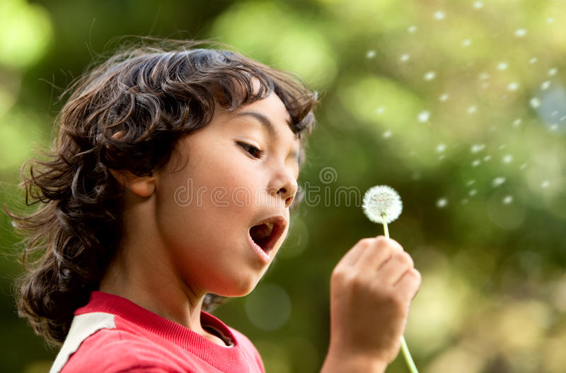 Download Boy playing with a flower stock photo. Image of park - 13642816