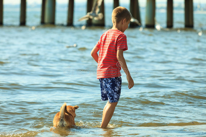 Boy playing with his dog. Connection between animals and kids concept. Sportive mixed race dog and boy kid playing together. Active child with puppy having fun royalty free stock images