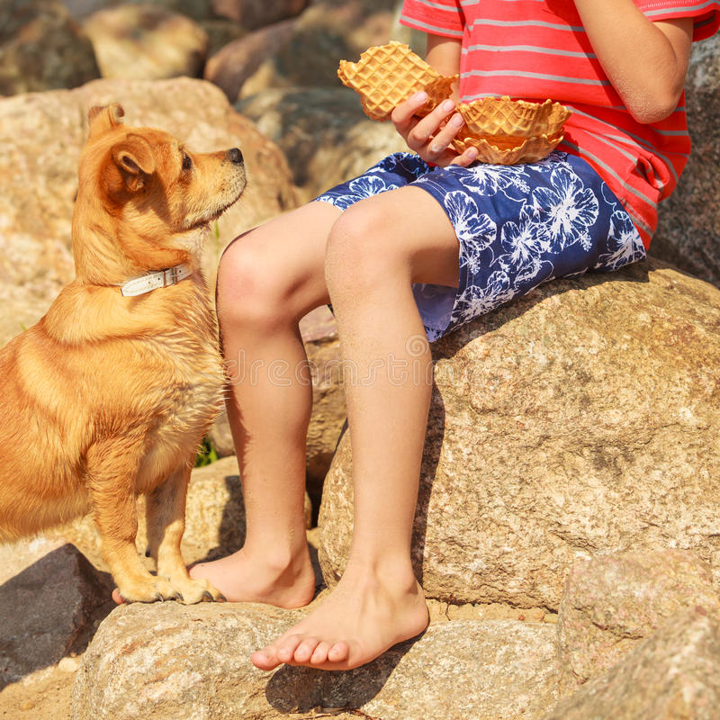 Boy playing with his dog. Connection between animals and kids concept. Sportive mixed race dog and boy kid playing together. Active child with puppy having fun royalty free stock image