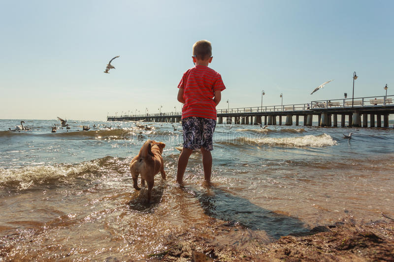 Boy playing with his dog. Connection between animals and kids concept. Sportive mixed race dog and boy kid playing together. Active child with puppy having fun stock image