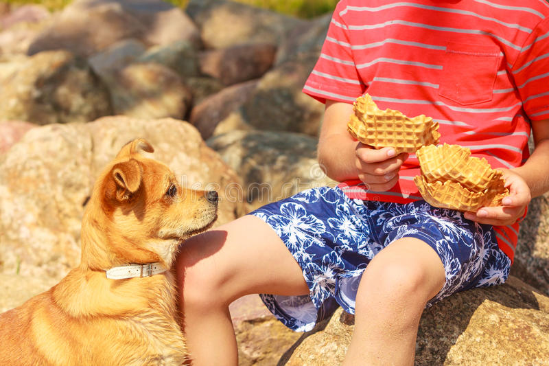 Boy playing with his dog. Connection between animals and kids concept. Sportive mixed race dog and boy kid playing together. Active child with puppy having fun stock photography
