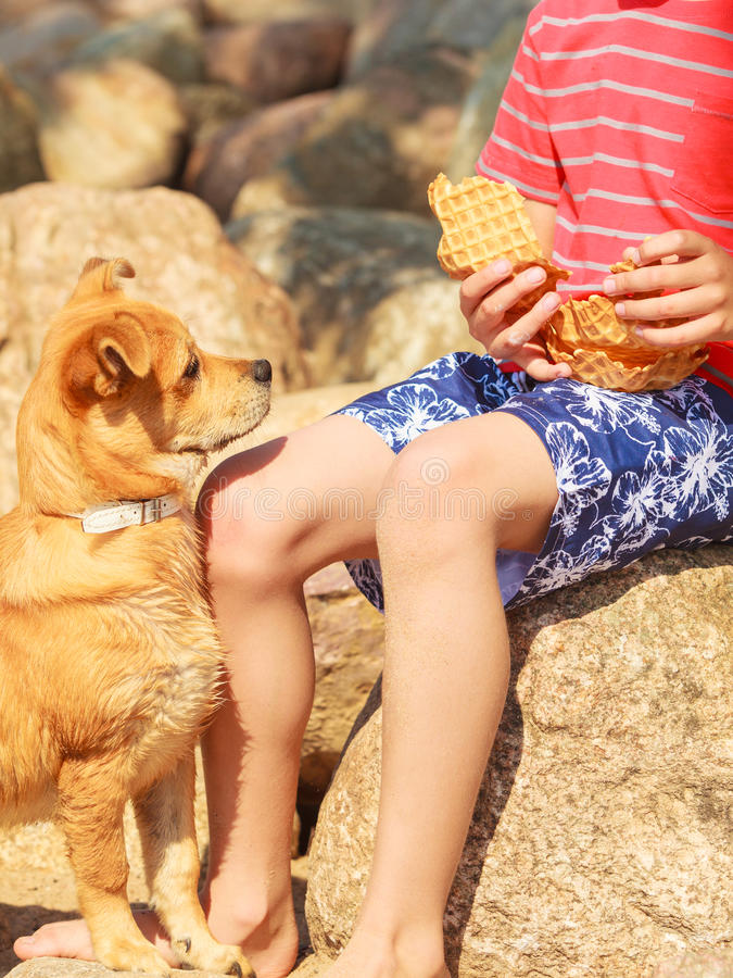 Boy playing with his dog. Connection between animals and kids concept. Sportive mixed race dog and boy kid playing together. Active child with puppy having fun royalty free stock photos