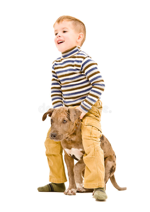 Boy playing with a puppy. Cheerful boy playing with a puppy pitbull stock photos