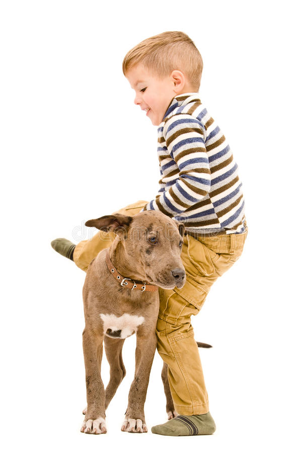 Boy playing with a puppy. Boy having fun playing with a puppy pitbull royalty free stock image