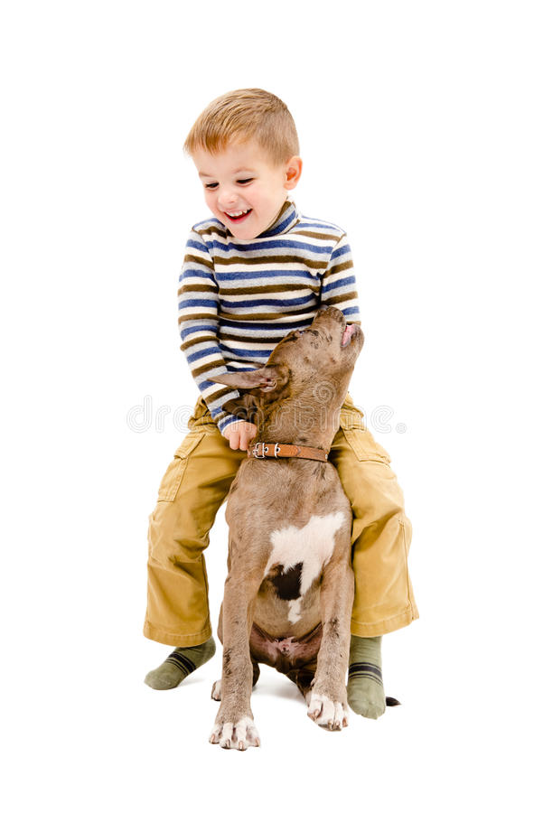Boy playing with a puppy pit bull. Cheerful boy playing with a puppy of breed pit bull isolated on white background stock images