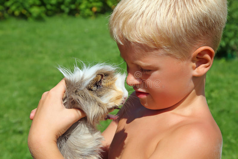 Boy plays with Guinea pig on meadow royalty free stock image