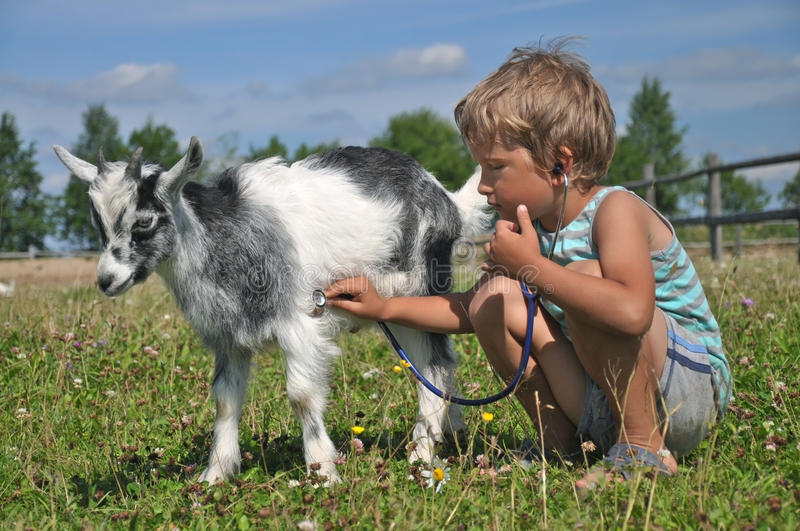 A boy plays a vet with a goat royalty free stock photo