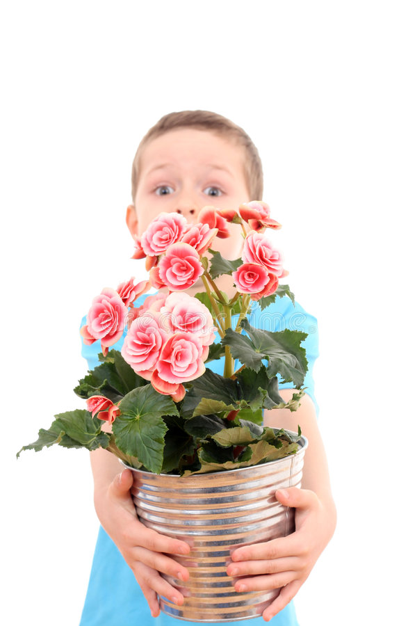 Boy with potted flower stock photography