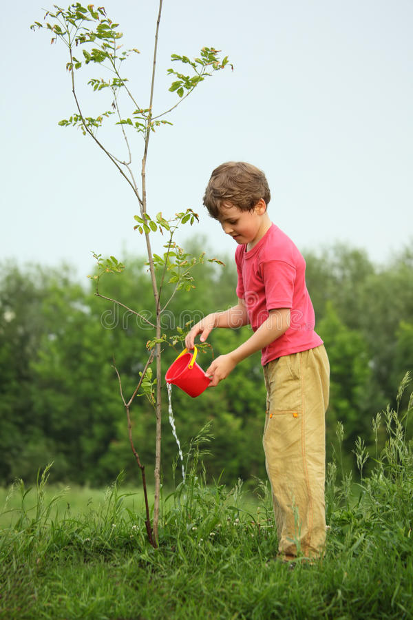 Boy pours on seedling of tree. Spring stock image