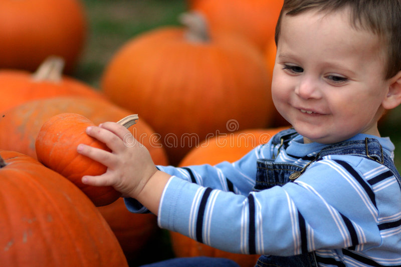 Boy With Pumpkins stock images