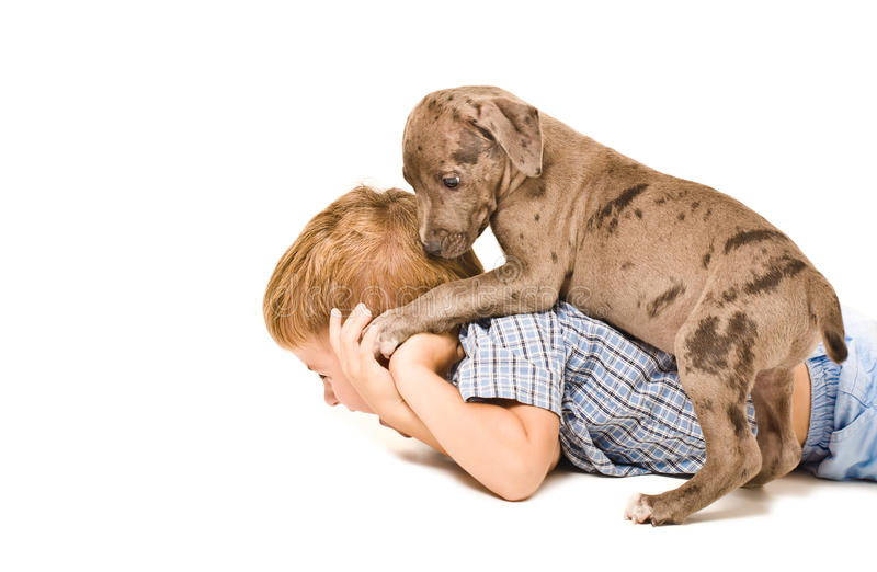 Boy and puppy pit bull having fun royalty free stock photo