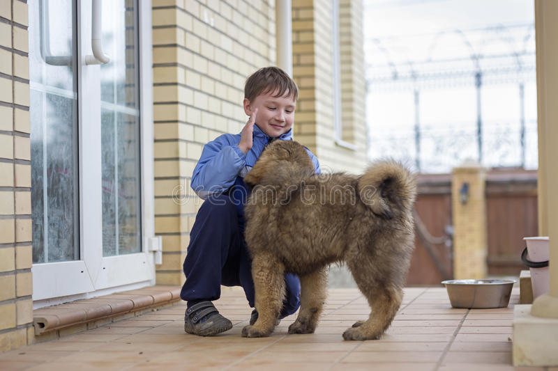 Boy and puppy Tibetan Mastiff stock photos