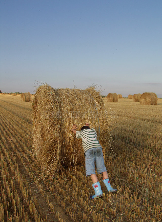 Download Boy pushing haystack stock photo. Image of wasigny, field - 151394