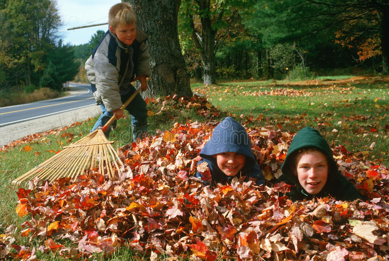 Boy raking leaves with two friends royalty free stock image