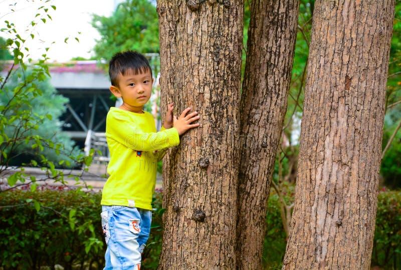 The boy ready to climb trees royalty free stock image