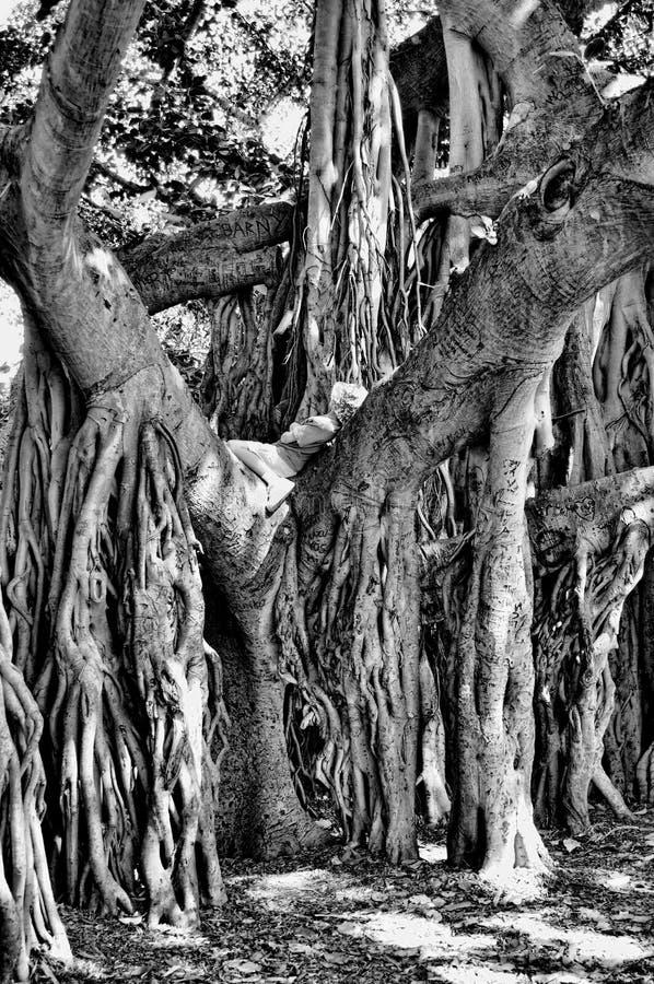 Free Boy Resting In Banyon Tree Stock Image - 13503901