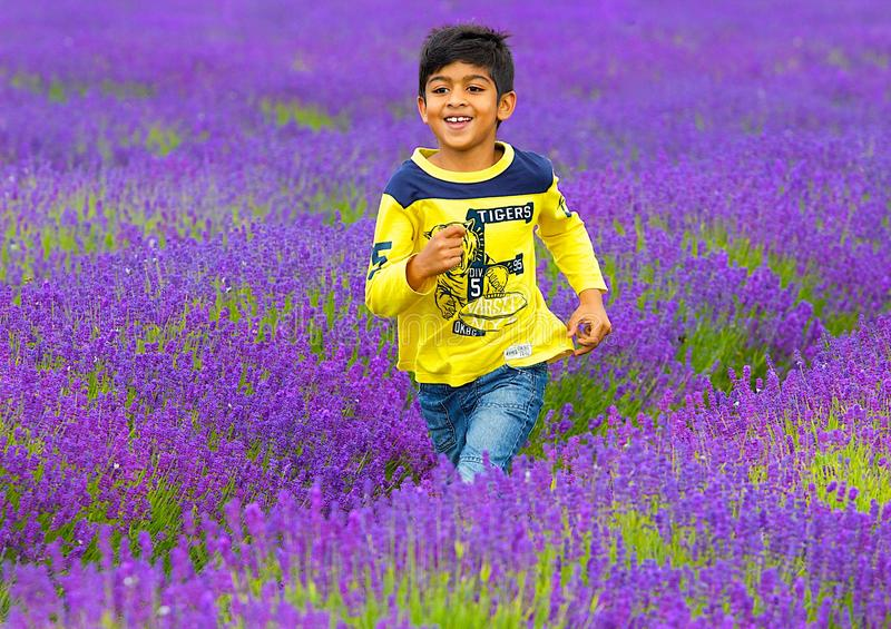 A boy running in Lavender farm in Banstead, Surrey, UK royalty free stock images