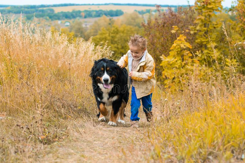 boy runs around with big dog on autumn hills of race royalty free stock photo