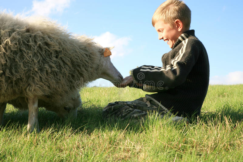 Download Boy and sheeps stock image. Image of livestock, feeding - 15920477