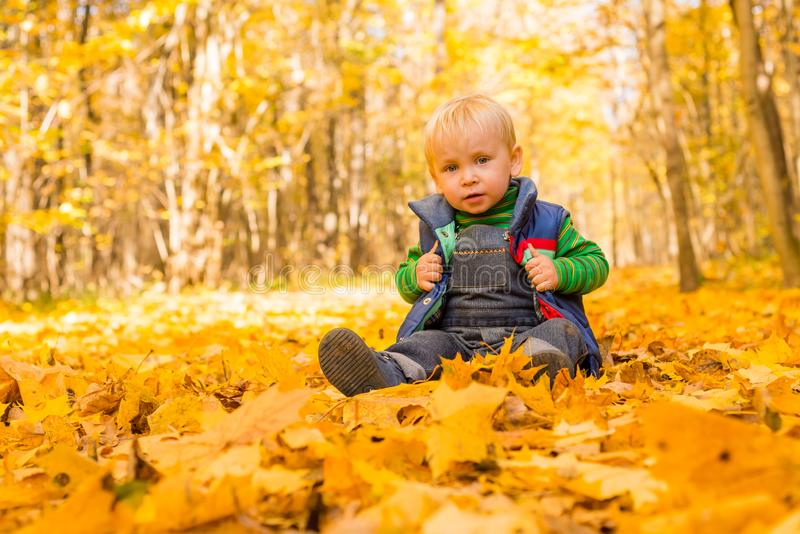 The boy sits in the autumn leaves in the park. Little boy. Very in the park. Golden autumn. Sunny day stock photo