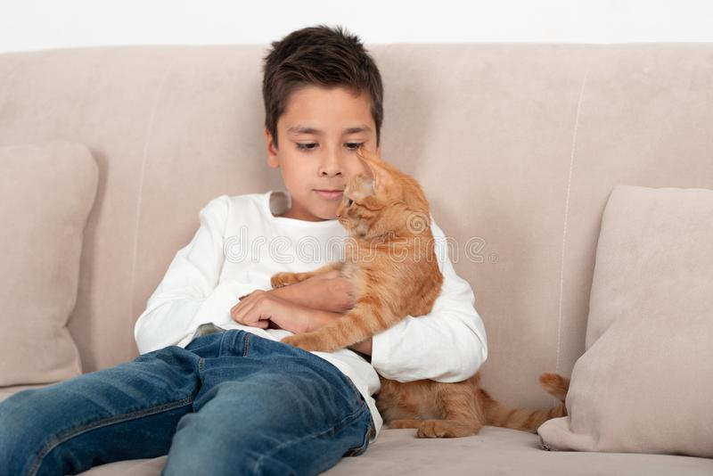 The boy sits on the couch and plays with the little red kitten in the room royalty free stock photo