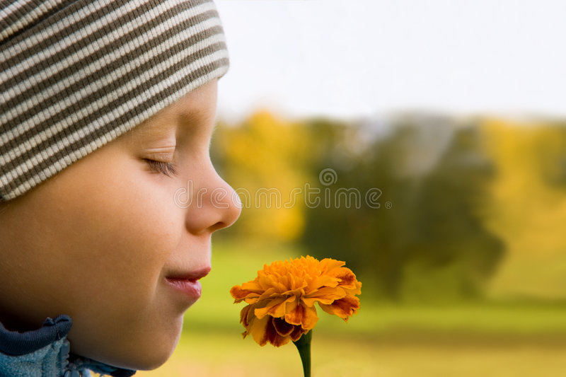Boy smelling flower stock image