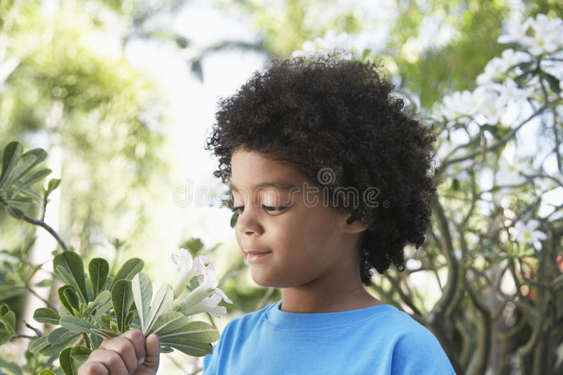 Boy Smelling Flowers In Garden royalty free stock image