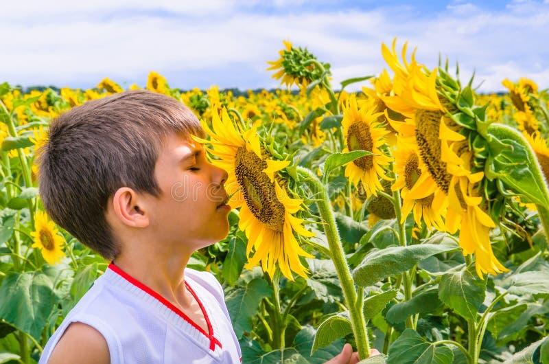 Boy smelling a sunflower stock photo