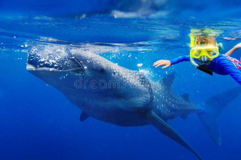 Boy snorkeling with whale shark stock images