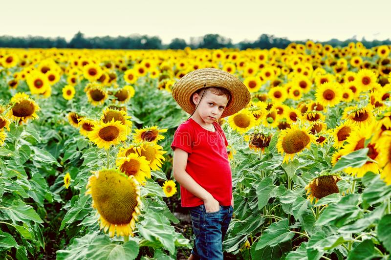 A boy in a straw hat in a field with sunflowers royalty free stock photography