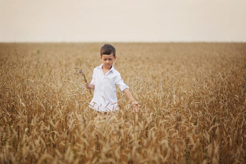 Boy in summer field. The concept of freedom and happy childhood stock image