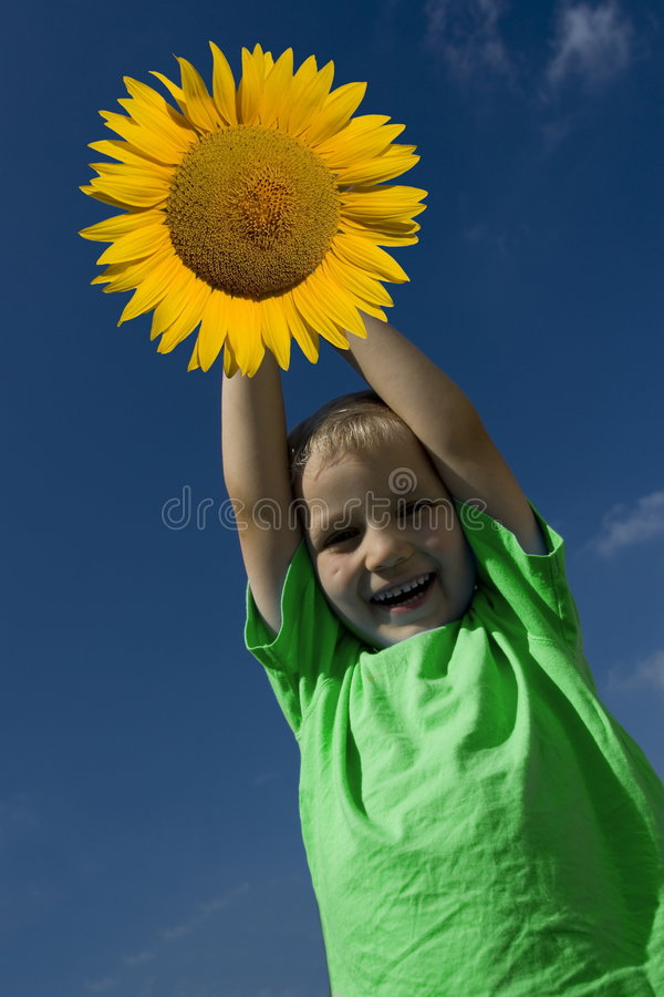 Boy with sunflower royalty free stock images