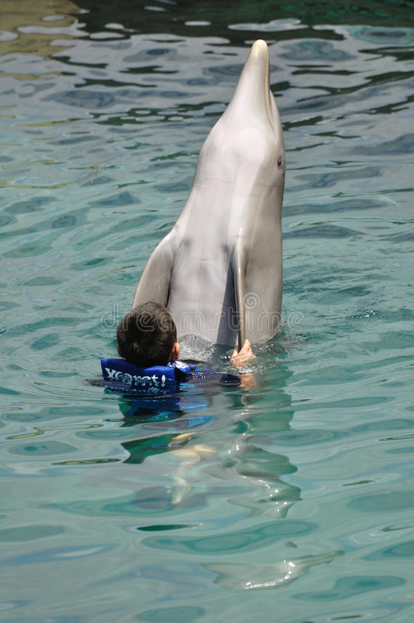 Download Boy Swimming With Bottlenose Dolphin Editorial Photo - Image: 21009571