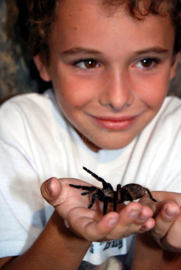 Boy with tarantula royalty free stock photos