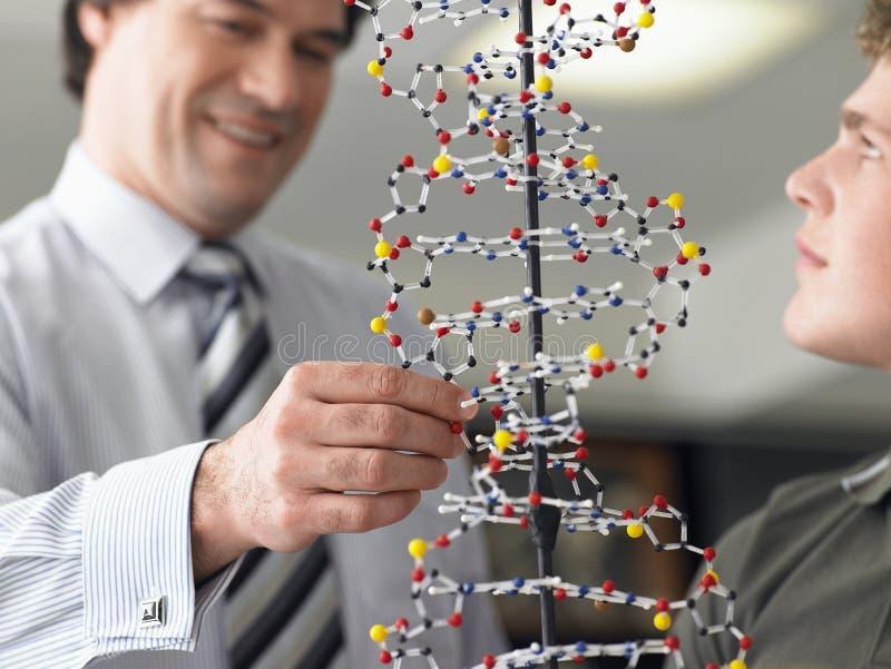 Boy With Teacher Examining DNA Model. Teenage boy with teacher examining DNA model in science class royalty free stock photo