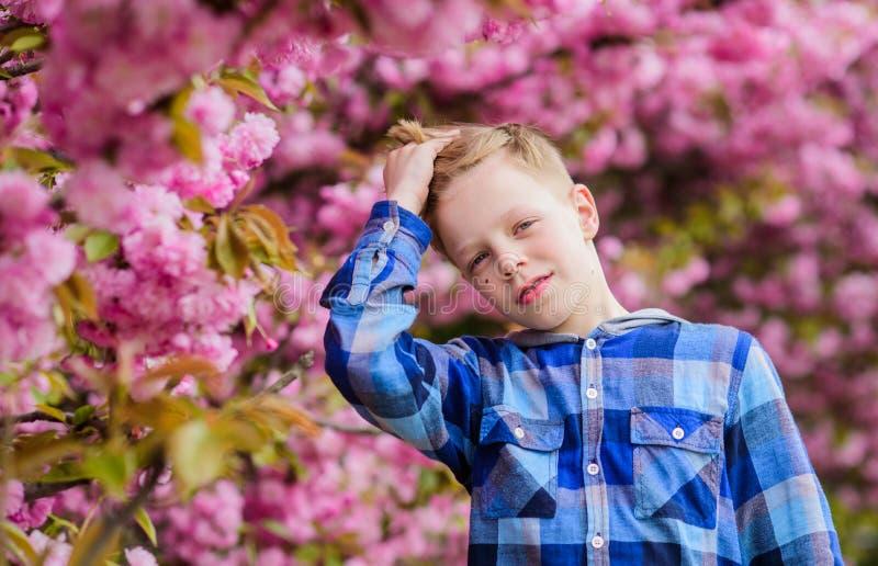 Boy teen posing near sakura. Child on pink flowers of sakura tree background. Botany concept. Guy enjoying cherry stock images