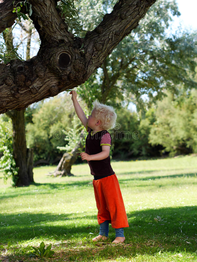 Boy touching a tree royalty free stock image