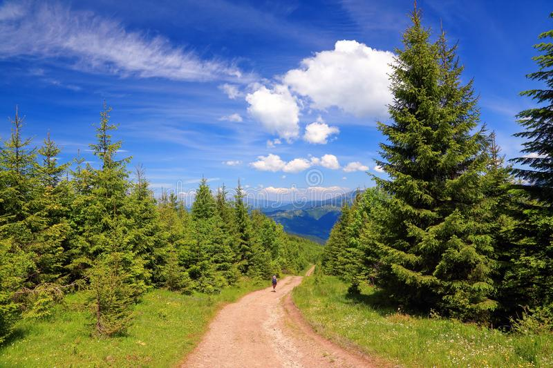 Boy with tourist backpacks go on a wide road near the forest on a sunny summer day. royalty free stock images