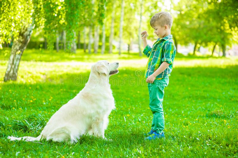 Boy training dog on green grass.  stock photography