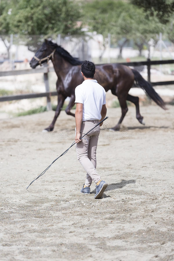 Boy training horse royalty free stock photo